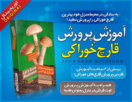قیمت آموزش پرورش قارچ خوراکی