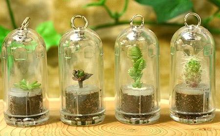 گیاه جیبی ، یک گیاه زیبا و قابل رشد همیشه همراه شما !