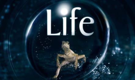 مستند حیات